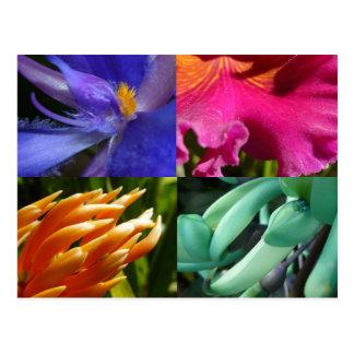 Exotic Blooms Postcard