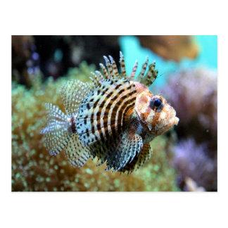 Exotic fish postcard