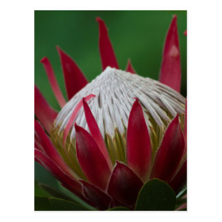 exotic flower postcard