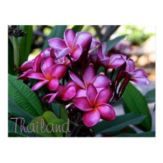 Exotic flower, Postcard