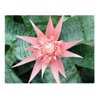 Exotic Pink Bromeliad Flower Postcard