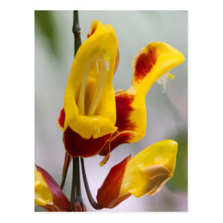 exotic plant postcard