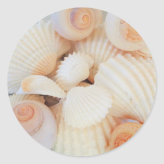 Exotic White Peach Sea Shells, Summer Beach Round Sticker