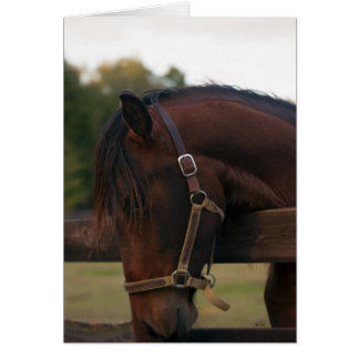 Expresso CCA Andalusian Stallion greeting card