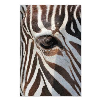 Eye of the Zebra Photographic Print
