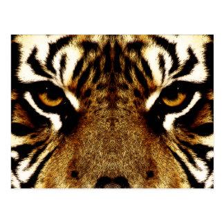 Eyes of a Tiger Postcard