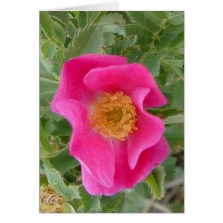 F0004a Wild Rose Card