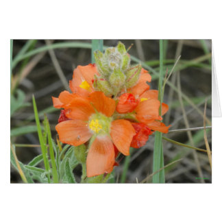 F0040 Orange Wildflowers Scarlet Mallow Card