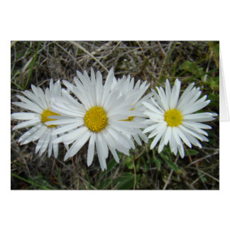 F0042 White Wildflowers Smooth Aster Card