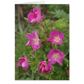 F0046 Wild Roses Card