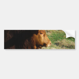 Face of Brown bull cow Bumper Sticker