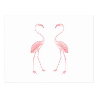 Facing Flamingos Postcard