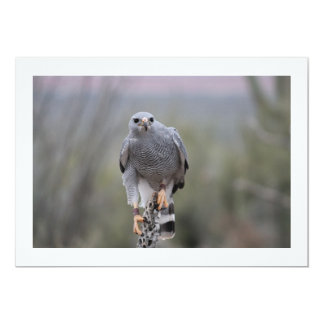 Falcon on Cactus Invitations