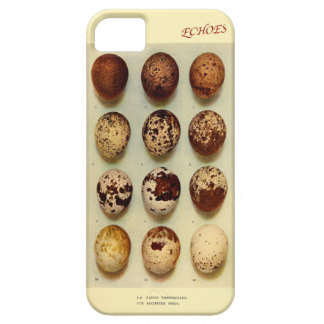 Falcon & Sparrowhawk's eggs Barely There iPhone 5 Case