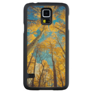 Fall colors of Aspen trees 2 Carved Maple Galaxy S5 Case