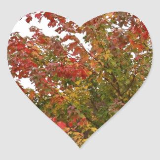 Fall Colors Photo Autumn Trees Leaves Heart Sticker