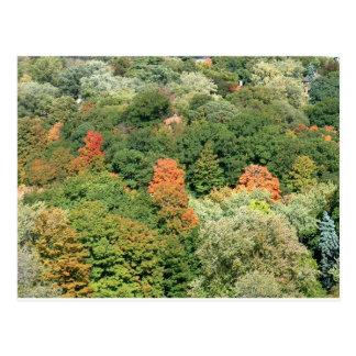 Fall Colours : HIGH PARK Toronto Postcard