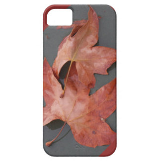 Fall Leaves iPhone5 case