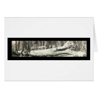 Fallen Monarch Yosemite Photo 1911 Card