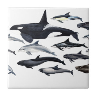 Family of the dolphins: orcas, dolphins, marsopas small square tile