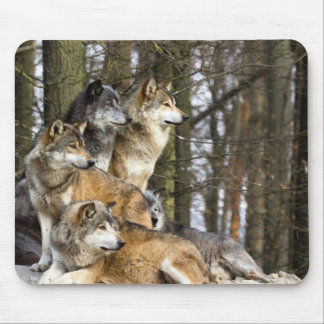 Family of Wolves Mouse Pad
