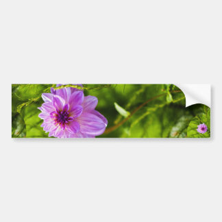 Fantasy Pink Dahlia Bumper Sticker