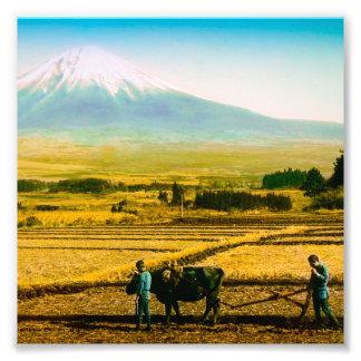 Farmers Oxen Plowing Field in Shadow of Mt. Fuji Photo Print