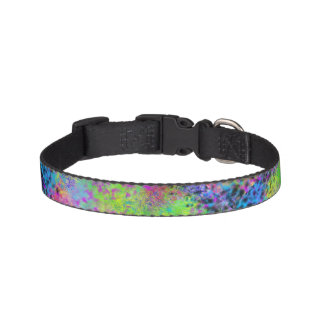 Fashion Forward dog collar