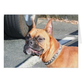 Fawn Boxer Dog Greeting Card