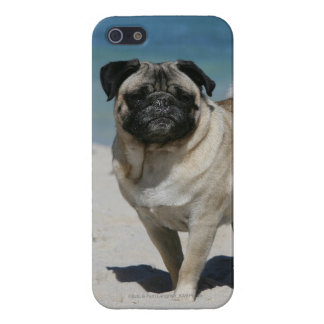 Fawn Pug at the Beach Case For iPhone 5/5S