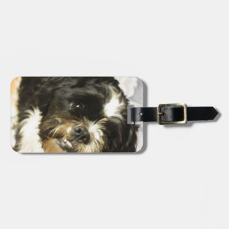 FB_IMG_1481505521015 Shitzu dog Luggage Tag