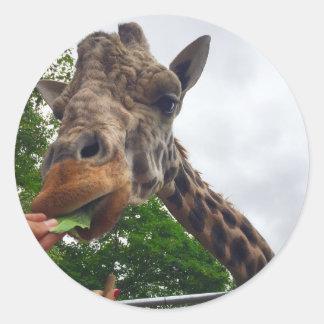 Feed a Giraffe Classic Round Sticker