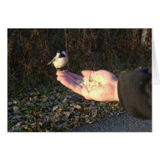 Feeding A Chickadee Card