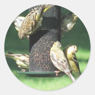 Feeding Frenzy Classic Round Sticker