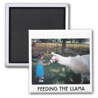 FEEDING THE LLAMA REFRIGERATOR MAGNET