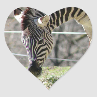 Feeding Zebras Heart Sticker