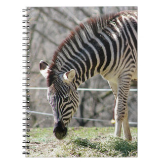Feeding Zebras Notebooks