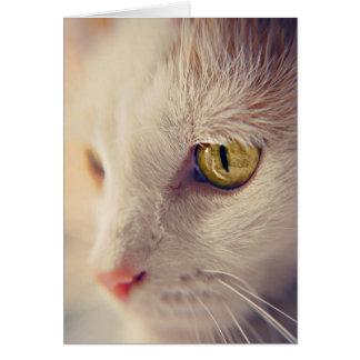 Feline Portraits. Card
