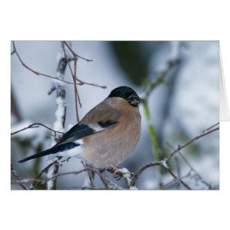 Female Bullfinch Card