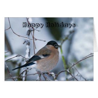 Female Bullfinch Happy Holidays Card