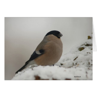 Female bullfinch in snow card