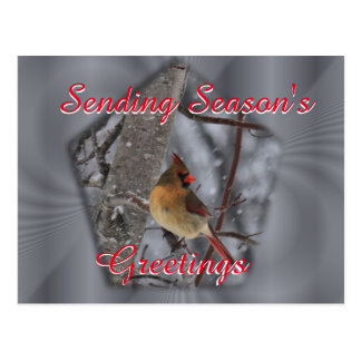 Female Cardinal Postcard- personalize as desired Postcard