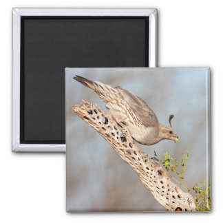 Female Gamble's Quail Square Magnet