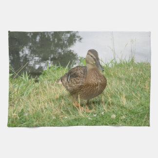Female Mallard Duck Kitchen Towels