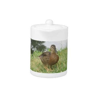 Female Mallard Duck Teapot
