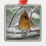 Female Northern Cardinal in snowy pine tree, Silver-Colored Square Decoration