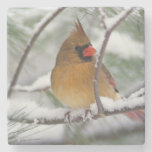 Female Northern Cardinal in snowy pine tree, Stone Coaster