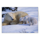 Female Polar Bear Lying Down with 2 coyscubs Card