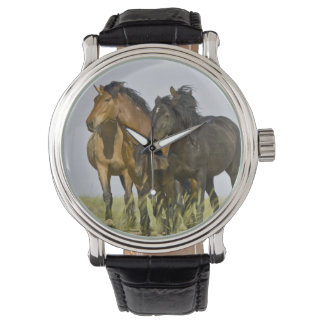 Feral Horse Equus caballus) wild horses 3 Watch