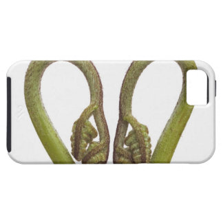Fern sprouts 2 case for the iPhone 5